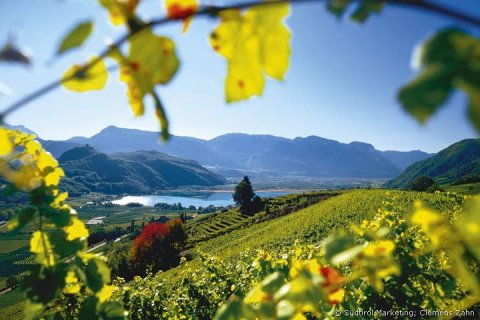 South tyrolean vineyards